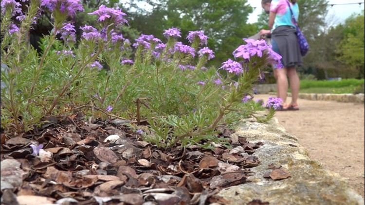 How Texas wildflowers survived the deep freeze