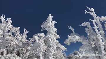 Trees completely covered in rime ice following California storms