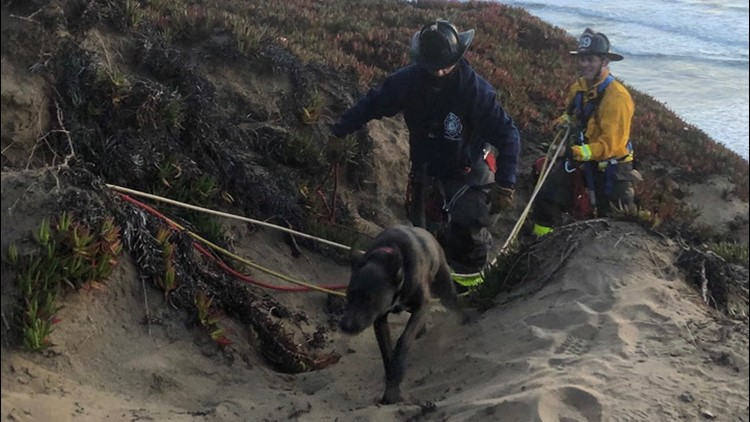 Dog rescued from cliff in San Francisco