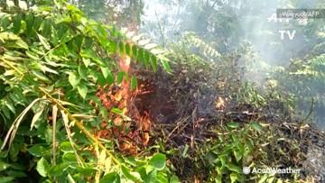 Forest fires burn in Indonesia's Sumatra region