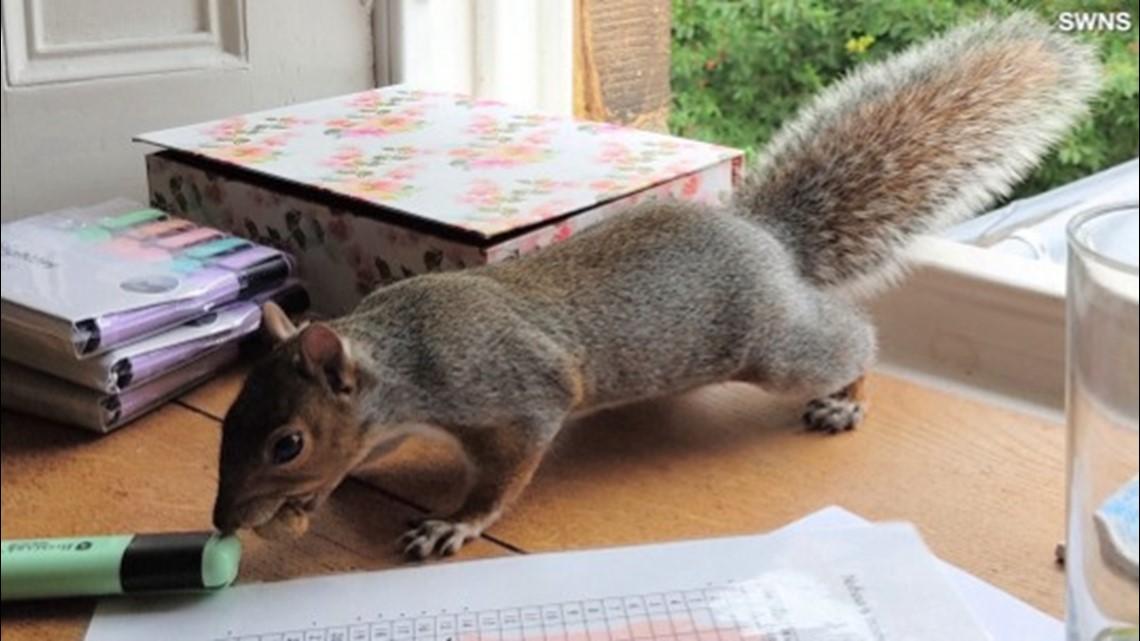 Adorable Squirrels Enjoy Their Human Friends