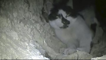 Cat Discovered in Chimney Rescued After Being Stuck There for 6 Days!