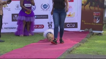 The Catwalk Turns Into Dogwalk As Nigeria Holds First Ever Dog Carnival!