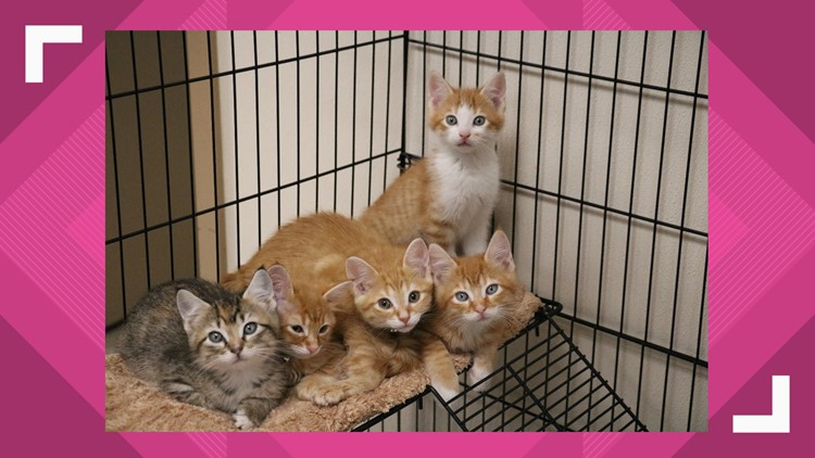 KAGS Pet of the Week: kittens
