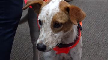 Pet of the Week : Murphy