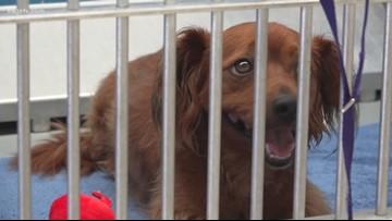 Aggieland Humane encourages pet licensing