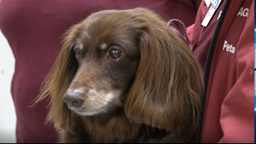 CHI St. Joseph four-legged worker makes final rounds at the hospital