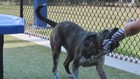 Pet of the Week : Abby