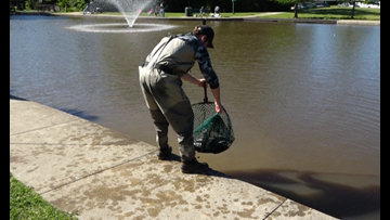 Restocking of catfish brings local fishermen to Central Park