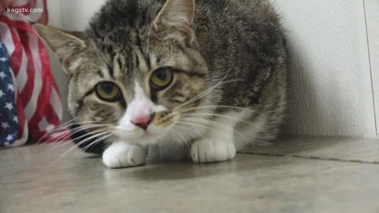 Pet of the Week : Tiny
