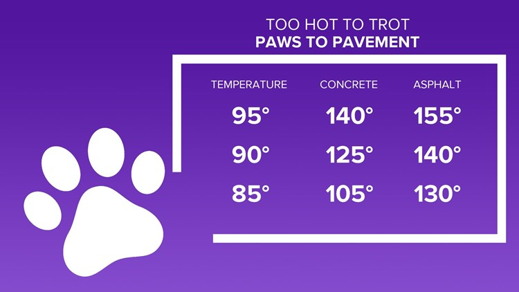 How to protect your furry loved ones as temperatures continue to climb