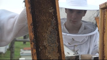 Training a younger generation of beekeepers