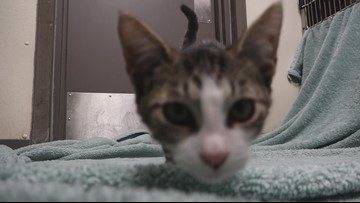 Pet of the Week: Peppermint