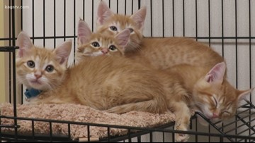 Five kittens ready for forever homes