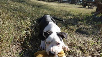 Cuteness Alert: Titus is KAGS Pet of the Week