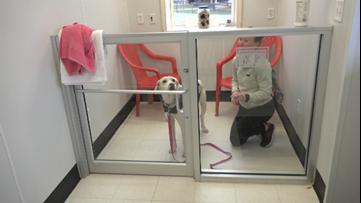 Aggieland Humane Society waives adoption fee for veterans