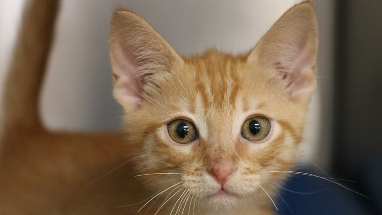 Pet of the Week: Several Kittens