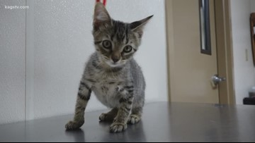KAGS Pet of the Week: Tom Collins