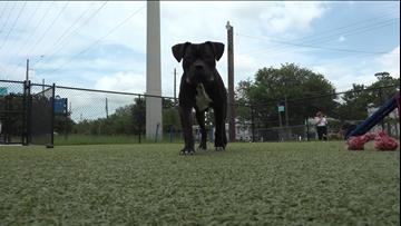 Pet of the Week : Dino