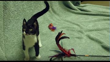 Pet of the Week: James Dean