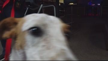 Pet of the Week- Murphy