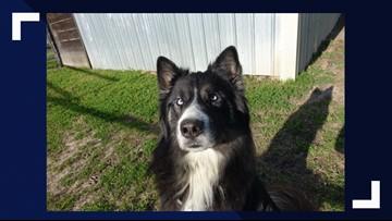 KAGS Pet of the Week: Salem