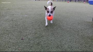 KAGS Pet of the Week: Watson