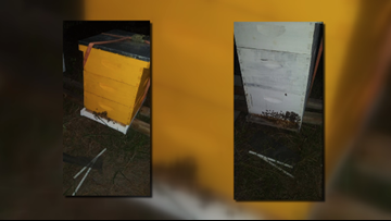Thousands of bees stolen from local beekeepers
