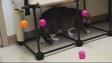 Meet KAGS Pet of the Week, Tiny