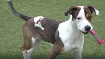 Pet of the Week: Regina