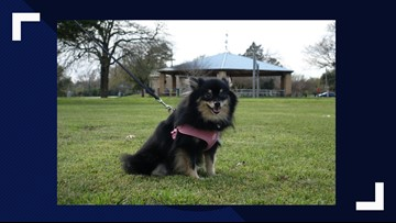 KAGS Pet of the Week: Bonnie