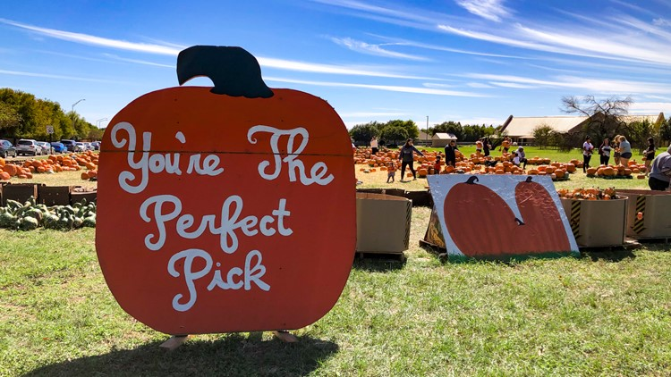 'Pumpkins for good': Aggie Habitat for Humanity Pumpkin Patch