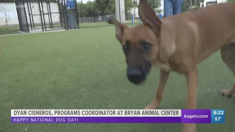 Pet adoption centers across the Brazos Valley are looking to clear their shelters