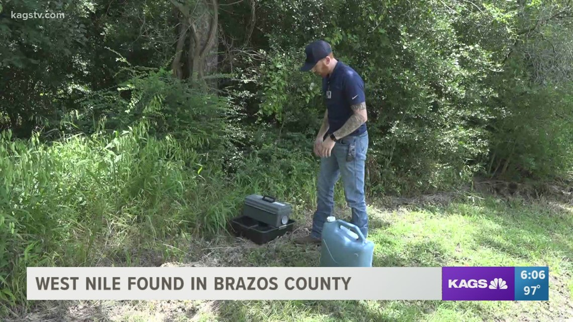 West Nile Virus makes summer return to the Brazos Valley