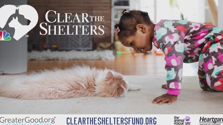 Aggieland Humane Society's 'Clear the Shelter' event hosted this Saturday
