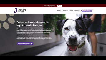 TAMU recruiting dogs for aging study
