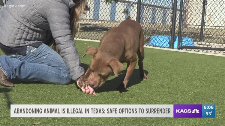 Abandoning animals is illegal in Texas: know the safe options for surrendering a pet