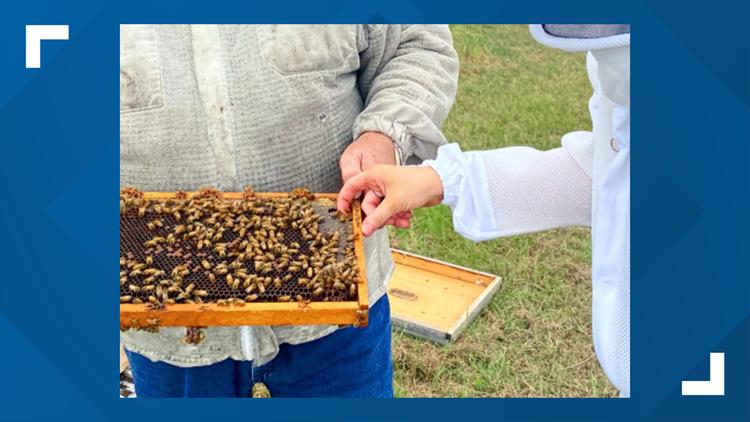 Elisabeth Explores: Buzzzin' around with the Brazos Valley Beekeepers Association