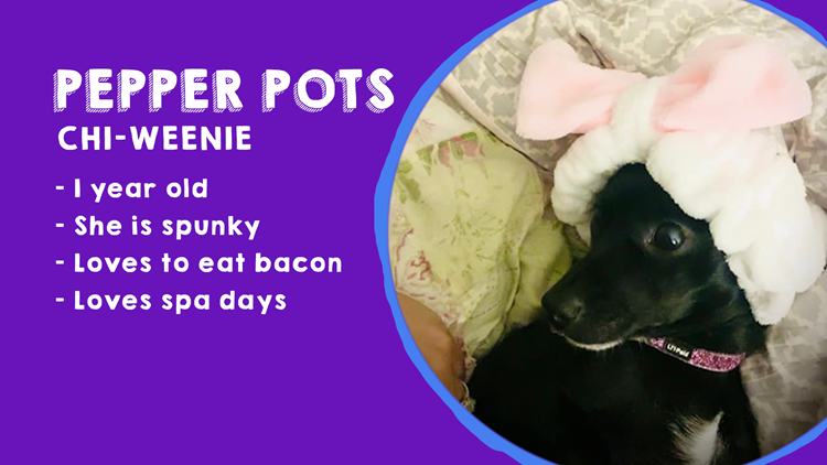 KAGS' National Dog Day giveaway winners!