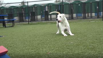 KAGS Pet of the Week: Meet Crowley