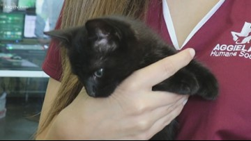 Pet of the Week: J.T.