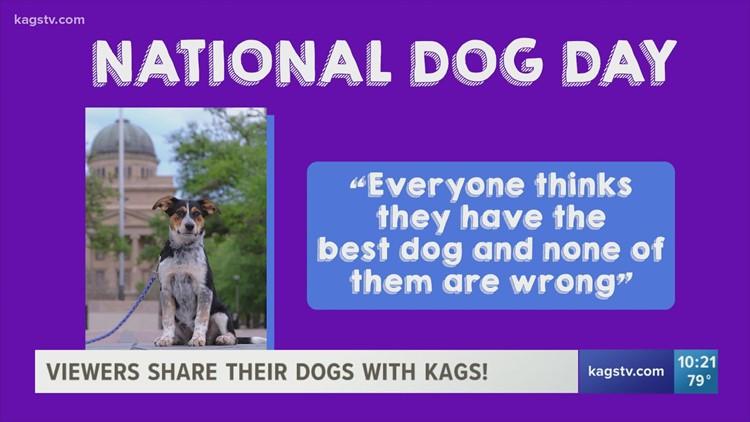 KAGS celebrates National Dog Day!