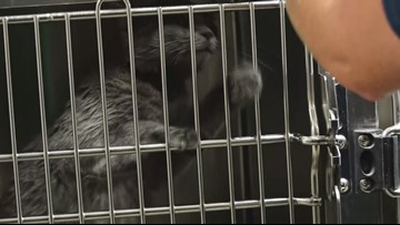 Bryan Animal Center's Clear the Shelter