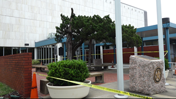 Brazos County Courthouse Cedar to be removed