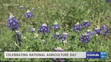 TAMU Agriculture and Life Sciences celebrates National Agriculture Day