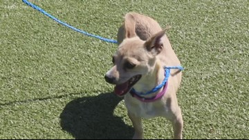 Pet of the week: Michelle