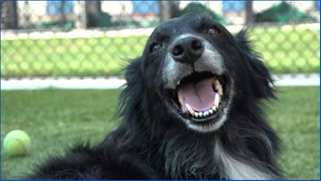 KAGS Pet of the Week: Meet Raindrop