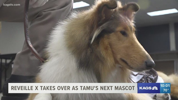 Reveille X takes over as TAMU's next mascot