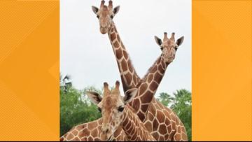 San Antonio Zoo offers Cyber Monday deal