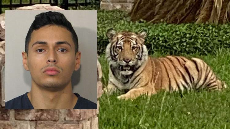 'It's not his tiger' | Lawyer for man at center of tiger investigation says HPD rushed to judgment